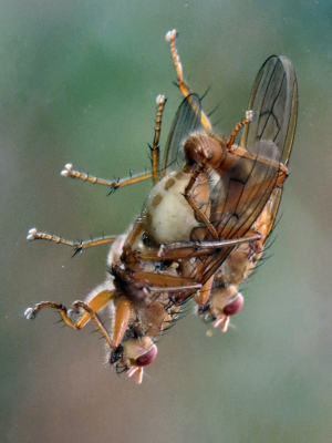 Dung Fly couple