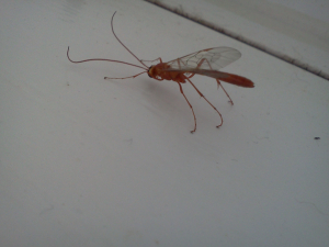 ufi (unidentified flying insect)