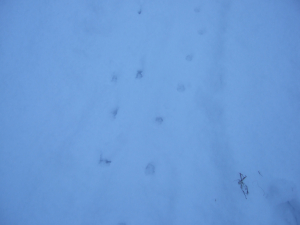 AN ODD COUPLES FOOTPRINTS IN THE SNOW