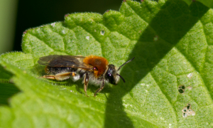 Early Mining Bee?