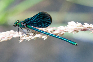 Damselfly/Dragonfly