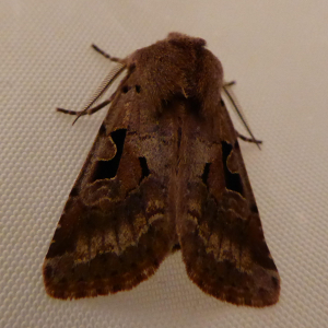 Hebrew Character 1