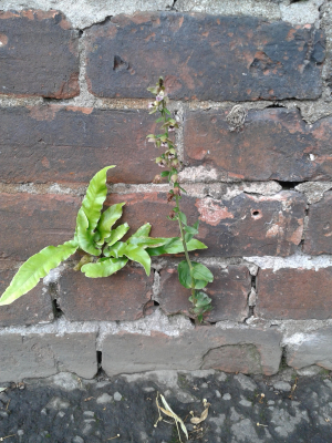 fern and orchid growing out of wall