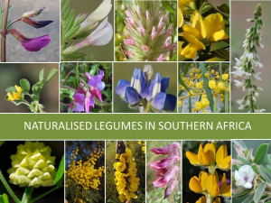 Alien Fabaceae of Southern Africa