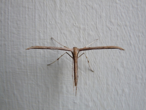Unknown but cool insect