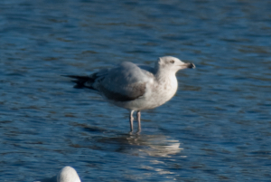 I'll name that gull in ...................  part 4