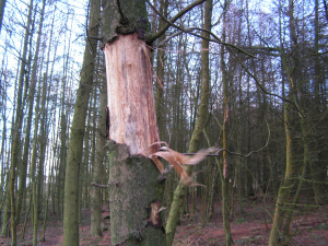 Is this an evidence of an animal? or does tree naturally do this?