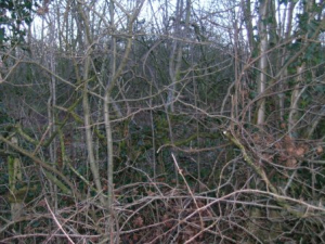 Hedgerow survey