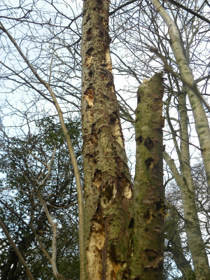 Evidence of woodpecker damage?