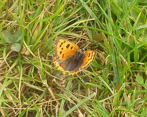 Small Copper?