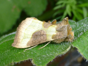 Is this a Burnished Brass?