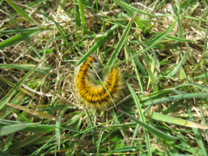 Caterpillar, St Agnes