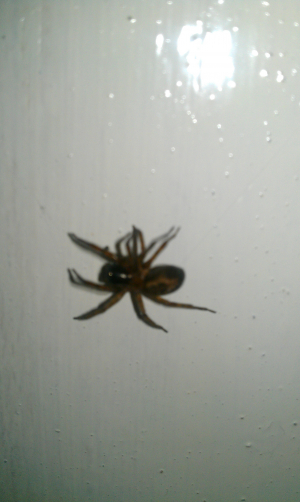 Spider in the outhouse