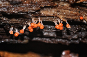 unknown fungi