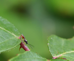unknown type wasp