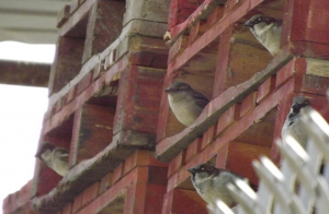 Apartment block for sparrows