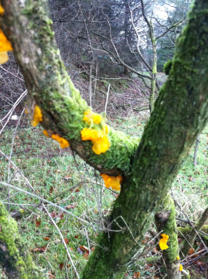 Brightly coloured fungi?
