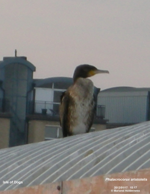 Not a Shag, Isle of Dogs - 2012
