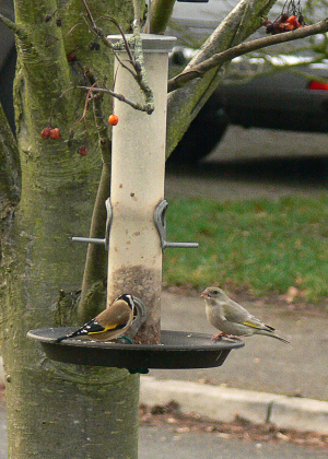 January 22 2012 gold finch and other