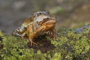 Frog_7