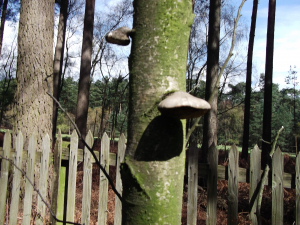 Fungus on tree