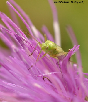 Tiny green insect