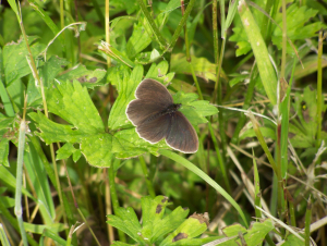 Unknown Butterfly?