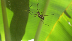 Spider in the amazon!