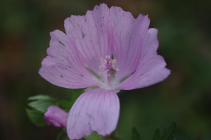 Small pale purple flower
