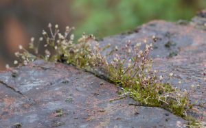 Moss growing on wall