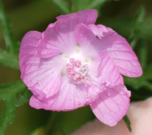 Pink flower with overlapping petals