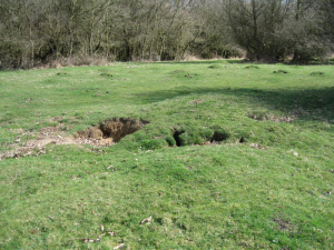 Abandoned Badger Sett