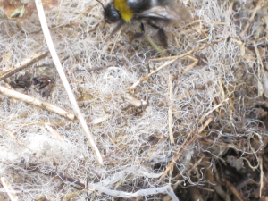 Bees and nest