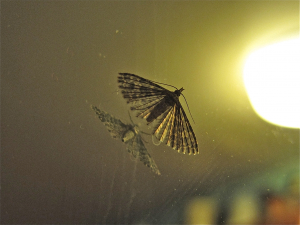 Moth on mirror