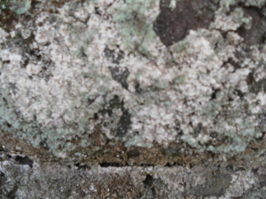 Lichen Hunt wall