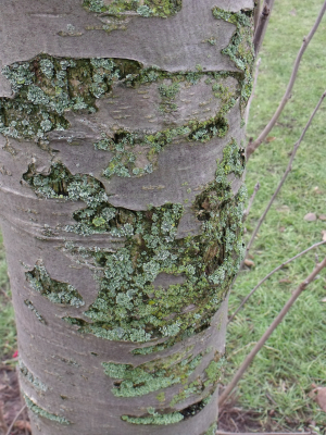 Lichen filling in the gaps