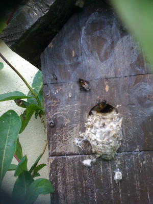 bees making a new home