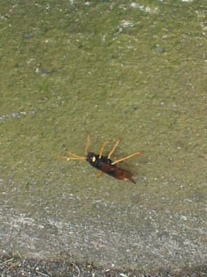 Insect for ID, please