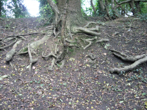 roots in bank of stream