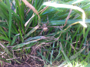 Stud farm cross spider