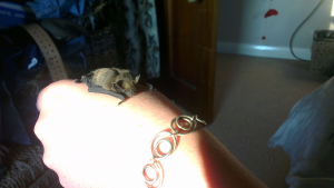 Baby grounded bat I looked after.