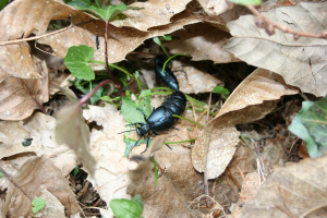 Beetles found in woodland