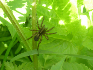 Spider in Alexandra Park 2