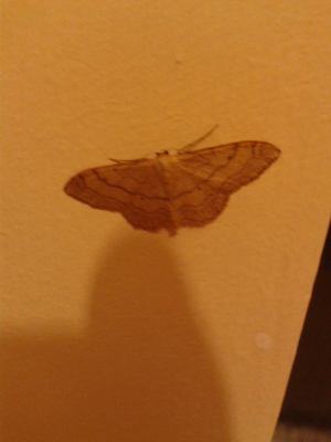 moth in the bathroom