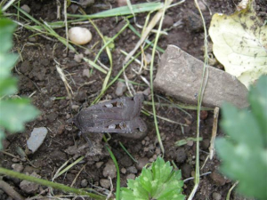 moth at Minnowburn (Small)