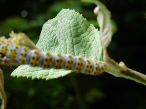 Yellow and white catapillar
