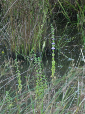 plant in shallow pond