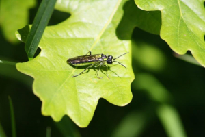 Bronze and green fly