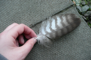 stripy feather