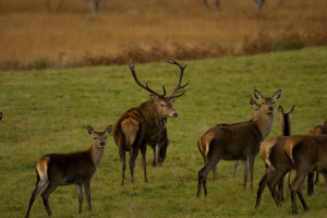 201210120 - Mull - Red Deer stand